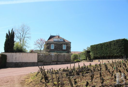 character properties France burgundy   - 7