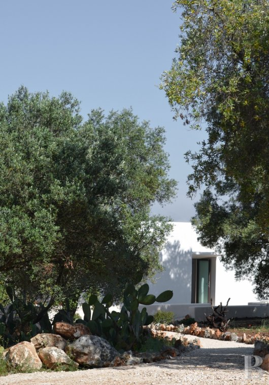 The Casa di Monti, between two seas and a field of ancient olive trees, perfect for holidays in Puglia in Southern Italy  - photo  n°3