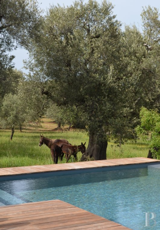 The Casa di Monti, between two seas and a field of ancient olive trees, perfect for holidays in Puglia in Southern Italy  - photo  n°36
