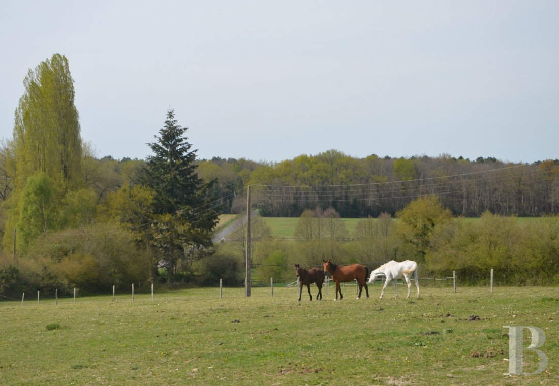 property for sale France pays de loire manors equestrian - 18
