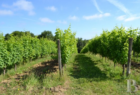 vineyards for sale France midi pyrenees   - 19