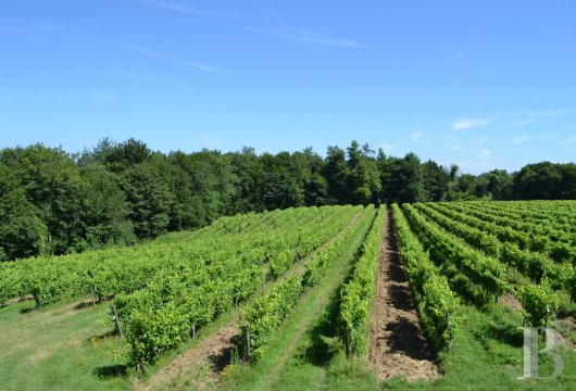 vineyards for sale France midi pyrenees   - 20