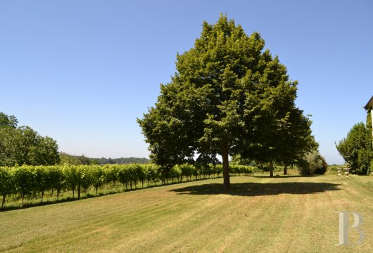 vineyards for sale France midi pyrenees   - 16