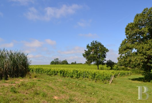 vineyards for sale France midi pyrenees   - 15