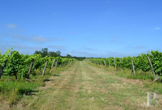 vineyards for sale France midi pyrenees   - 12