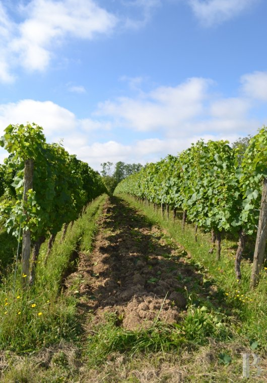 vineyards for sale France midi pyrenees   - 18