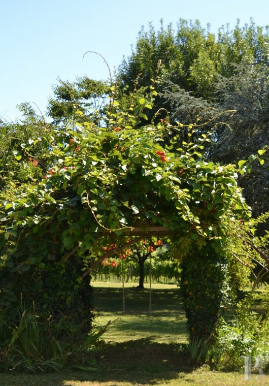 vineyards for sale France midi pyrenees   - 14