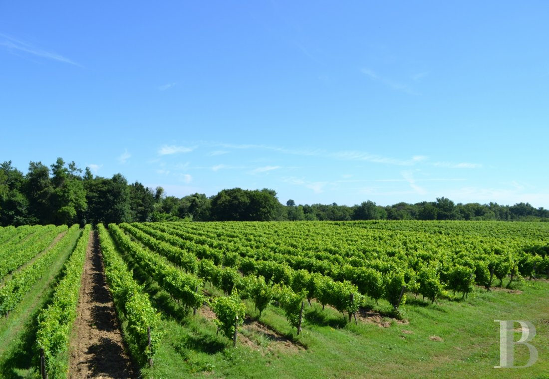 vineyards for sale France midi pyrenees   - 21