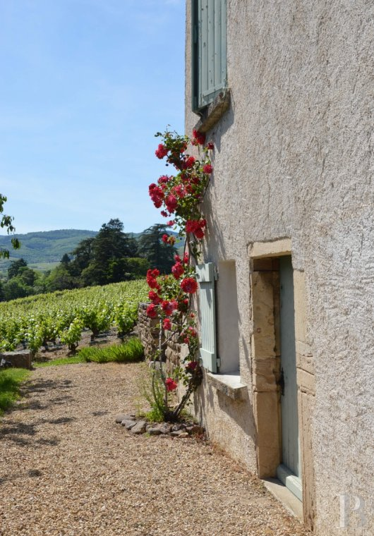 character properties France rhones alps vines beaujolais - 3
