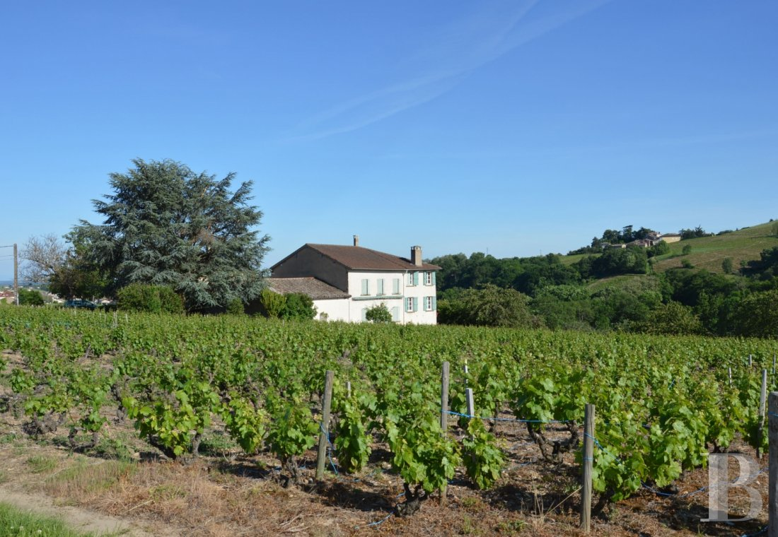 character properties France rhones alps vines beaujolais - 1