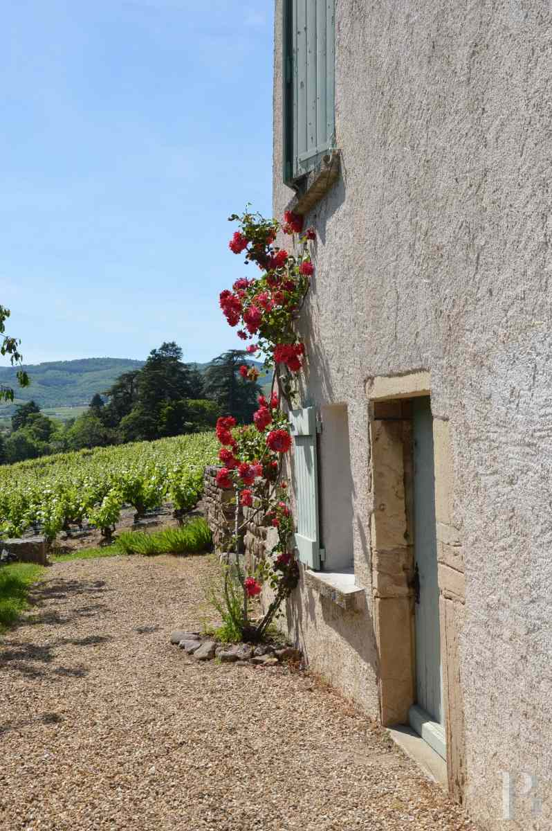 character properties France rhones alps vines beaujolais - 3 zoom