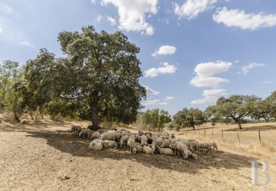 propriete agricole - 16
