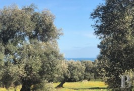 A construction project, a sea view and thousand-year-old olive trees