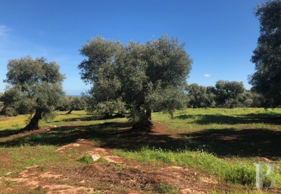 A construction project, a sea view<br/>and thousand-year-old olive trees