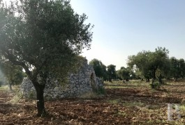 "A traditional, dry stone ""trullo"" on a 1.3 ha plot of land for an architectural project,  in keeping with its surroundings in Carovigno, ..."