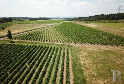 domaine viticole - 8