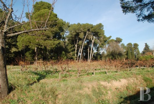 domaine viticole - 5
