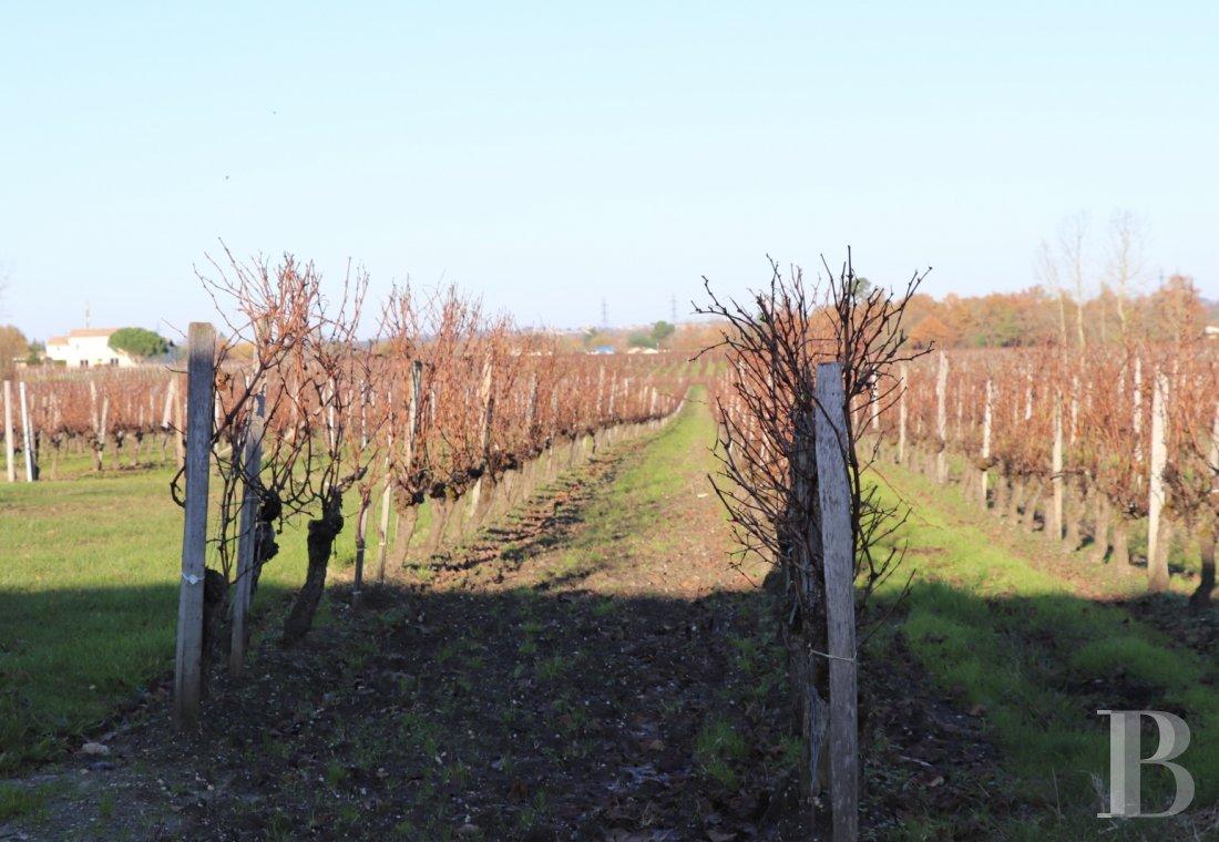propriete viticole - 2