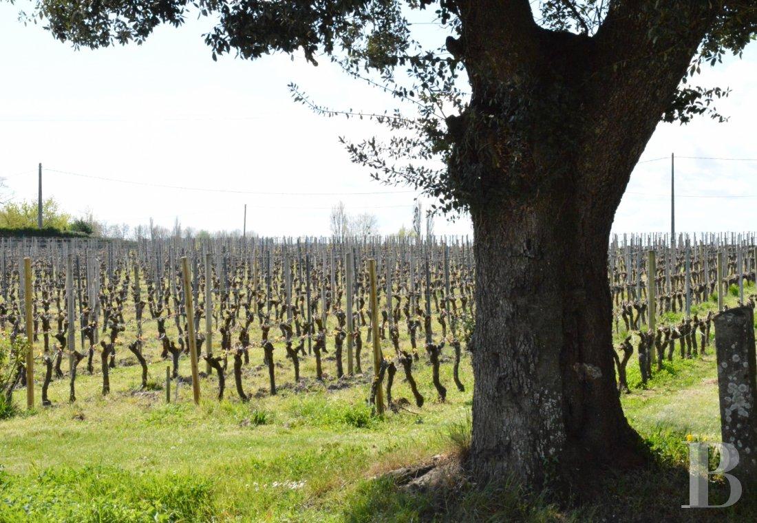 propriete viticole - 4