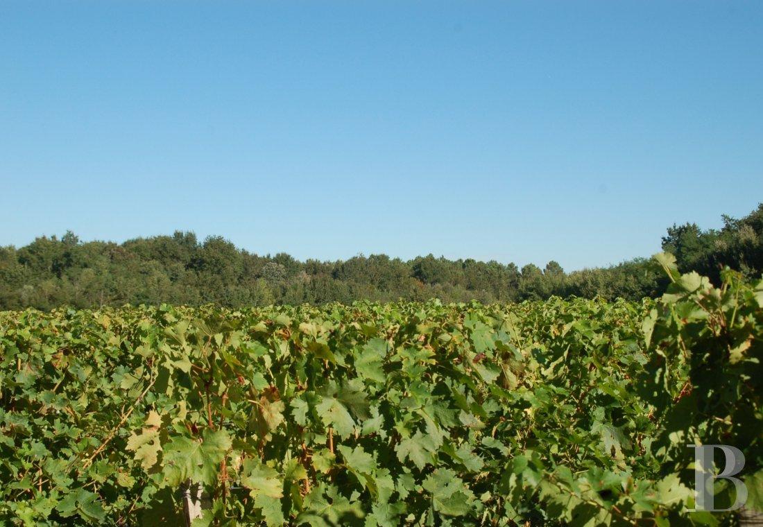 propriete viticole - 5