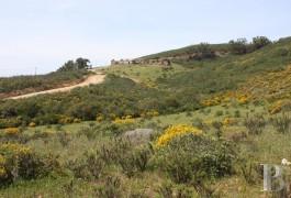terrain ruines - 2